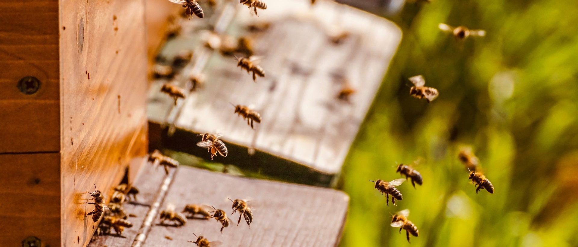 Hunajayhtymän yhteystiedot