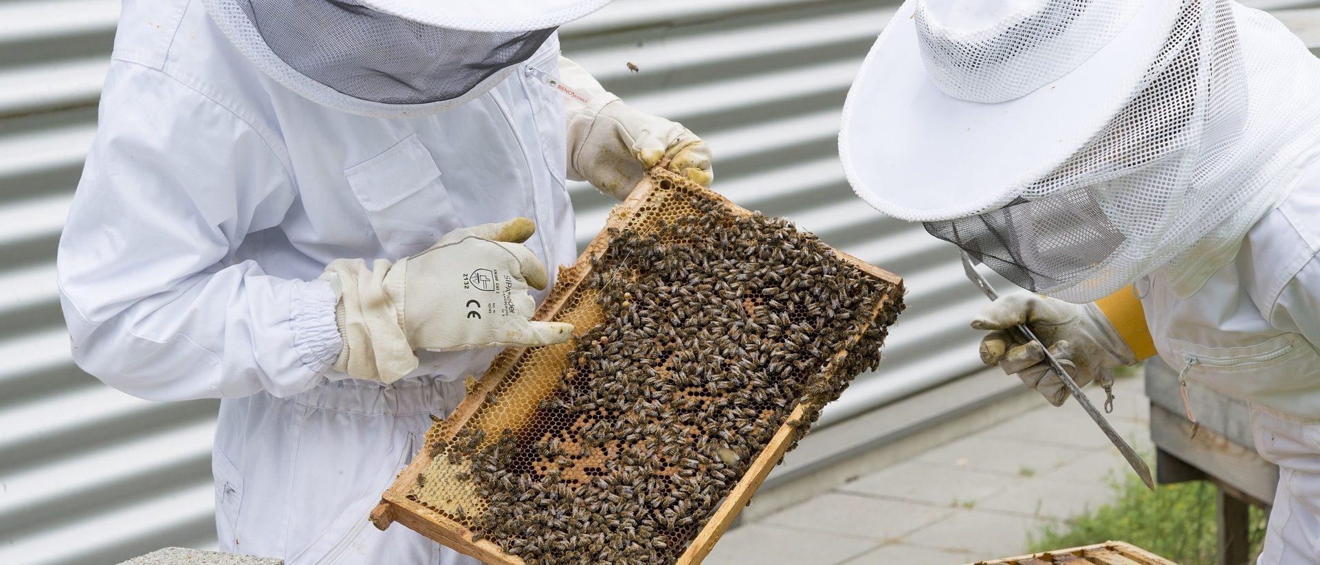Hunajan keräys ja käsittely