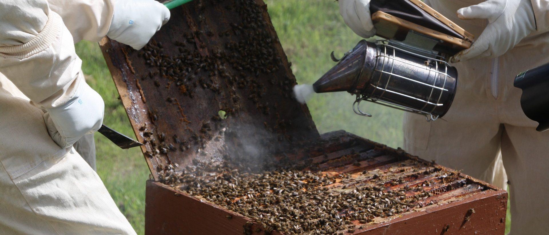 Mehiläishoitajan tarvikkeet