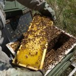 Mehiläispesien myynti