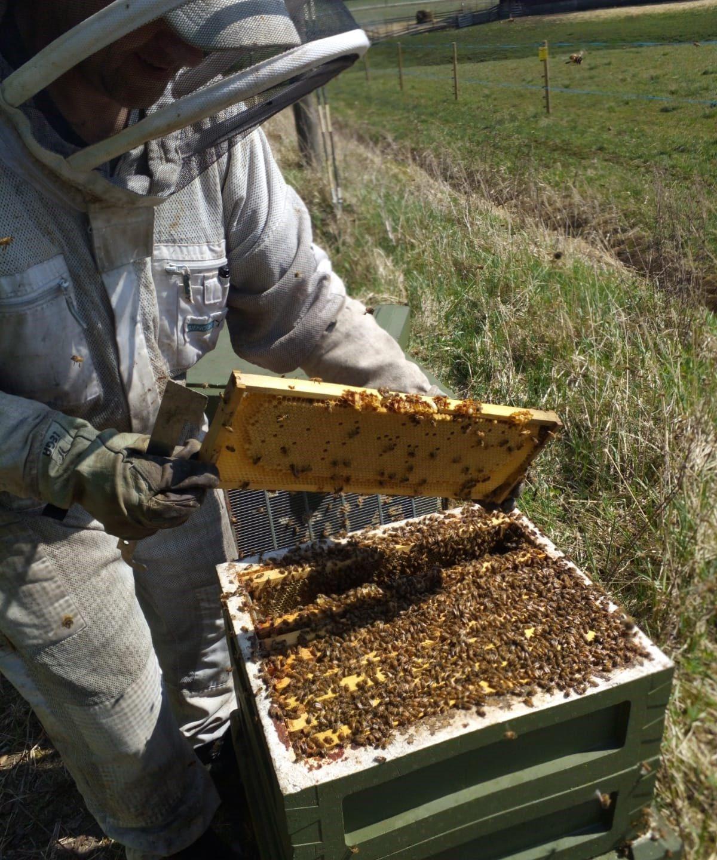 Myytävä mehiläispesä
