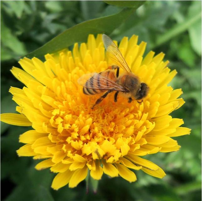 mehilainen-front