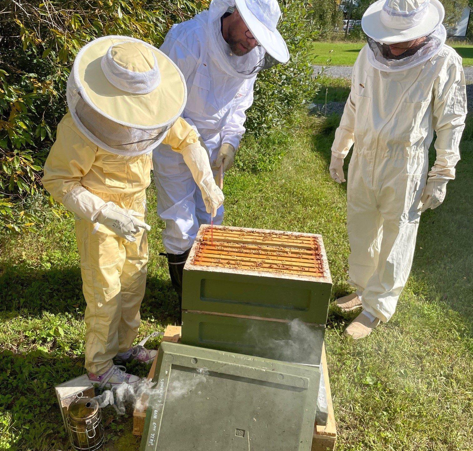 Mehiläiskennojen irrotus